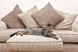 cat sofa cat on sofa royalty free stock images image 21420429
