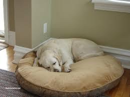 Choosing A Dog Bed