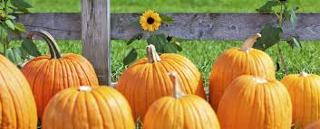 Damariscotta Pumpkin Festival by 4 Reasons The Damariscotta Pumpkin Festival Is One Of The Best