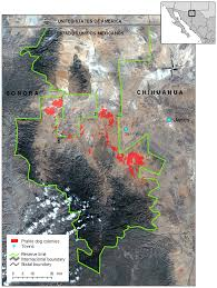 100 Where Is Chihuahua Located The Study Area Was Located In The Janos Biosphere Reserve