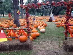 Pumpkin Patch Ct by Jacksonville Moms Blog Pumpkin Playdate