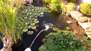 Backyard Bass Pond - YouTube Garnedgingsteishplantsforpond Outdoor Decor Backyard With A Large Fish Pond And Then Rock Backyard 8 Small Ideas Front Yard Ponds Backyards Wonderful How To Build For Koi Loving And Caring For Our Poofing The Pillows Project Photos Ideasnhchester Rockingham In Large Bed Scanners Patio Heater Flame Tube Beautiful Classical Design Garden Well Cared Indoor Waterfall Eadda Lawn Style Feat Artificial 18 Best Diy Designs 2017