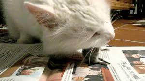 unsere katze frisst eine maus im wohnzimmer