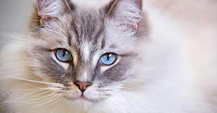 renal failure in cats chronic kidney disease what does kidney failure in cats really