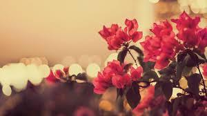 Retro Flowers Wallpapers