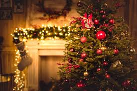 Christmas Tree Has Aphids by 25 000 Bugs In The Average Christmas Tree Holistic Pest Solutions