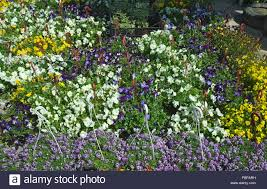 100 Blooming House Various Blooming House Flowers In Flower Shop Stock Photo