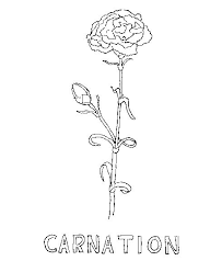 Free Printable Carnation Flower Coloring Pages Select One Of 1000 The Category Flowers