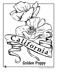 State Flower Coloring Pages California Page Classroom Jr