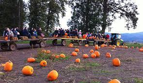 Pumpkin Patch Sauvie Island Corn Maze by Portland Corn Maze The Maize At The Pumpkin Patch