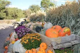 Pumpkin Patch Fort Collins by Diana U0027s Pumpkin Patch U0026 Corn Maze Where Fall Lives