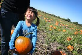 Highwood Pumpkin Festival 2017 by Where Can You Find A Pumpkin In Lake County Visit Lake County