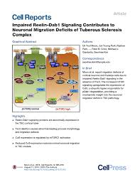 impaired reelin dab1 signaling contributes to neuronal migration