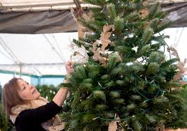 Silvertip Christmas Tree Orange County by Christmas Tree Prices Spiking Statewide Amid Holiday Shortage