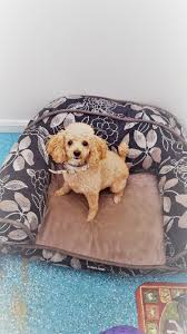 Kirkland Dog Beds by Planning Your Pet U0027s Vacation U2013 The Dapper Dog Llc