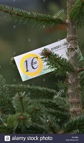 Nordmann Fir Christmas Tree Seedlings by Christmas Tree Plantation Stock Photos U0026 Christmas Tree Plantation