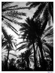 Palm Trees Tumblr Black And White Image
