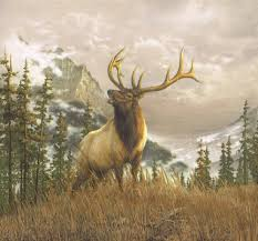 Country In The Wild Elk Not Deer Moose Mountains Wallpaper With
