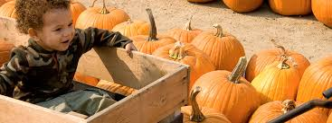 Kidspace Childrens Museum Annual Pumpkin Festival by Museums In La Natural History Museum Sleepover Fun Places To Go