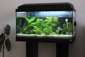 aquarium poisson prix vends 67 21 poissons 2xaqua 54l rena rena 10l accesssoires