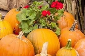 Local Pumpkin Farms In Nj by Fall Farm Fun In Warren County New Jersey Explore Warren