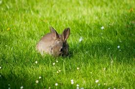 Can Bunny Rabbits Eat Pumpkin Seeds by What Animals Eat Pumpkin Top 5 Critters You Need To Avoid