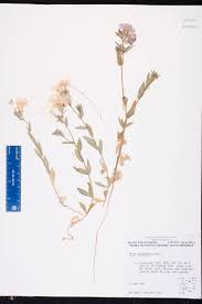 Alachua Sink Gainesville Fl by Herbarium Specimen Details Isb Atlas Of Florida Plants