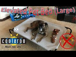 Coolaroo Dog Bed Large by Coolaroo Elevated Pet Bed Large Youtube