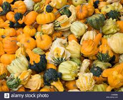 Varieties Of Pumpkins Uk by Varieties Of Squash In Farmer S Market In Montreal Canada Stock