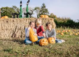 Pumpkin Patch Rides by Rogate Pumpkin Patch