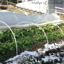 Low Tunnels Vs Cold Frames 484 Best Gardening Ideas Images On Pinterest Garden Tips Best 25 Winter Greenhouse Ideas Vegetables Seed Saving Caleb Warnock 9781462113422 Amazoncom Books Small Patio Urban Backyard Slide Landscaping Designs Renaissance With Greenhouse Design Pafighting Fall Lawn Uamp Gardening The Year Round Harvest Trending Vegetable This Is What Buy Vegetables Fresh And Simple In Any Plants Home Ipirations