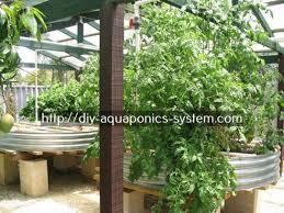 How To Build A Cheap DIY Backyard Aquaponics System