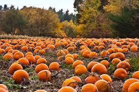 Pumpkin Patch Dixon Il by Fall Festival Pulaski County Usa