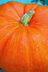 Pumpkin Hummus Recipe Without Tahini by Pumpkin Hummus Dip With Barbera U2013 Winemaker U0027s Table