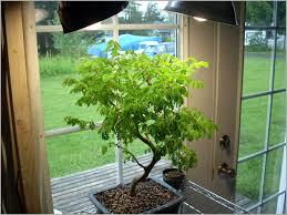 Appealing Indoor Plant Grow Lights Accessories Lighting Ideas