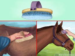 Rubber Horse Shedding Tool by How To Groom A Horse 13 Steps With Pictures Wikihow