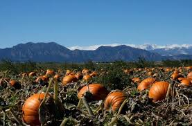 Chatfield Pumpkin Patch Hours by The 10 Best Pumpkin Picking Patches Around Denver Care Com Community