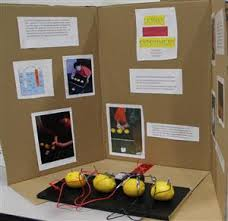 Proud Moments 2014 Science Fair Winners