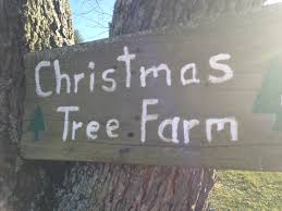Leyland Cypress Christmas Tree Farm by December 2014 Finding Family Adventures