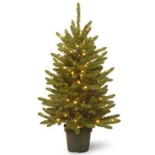 Plantable Christmas Tree Ohio by Buy Pre Lit Potted Christmas Trees From Bed Bath U0026 Beyond
