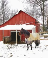 To Blanket Your Horse?or Not? - Expert Advice On Horse Care And ... Defeat The Enemy Fly Control Options For Horse And Barn Music Calms Horses Emotional State The 1 Resource Breyer Crazy In At Schneider Saddlery Horsedvm Controlling Populations Around Oftforgotten Bot Equine Dry Lot Shelter Size Recommendations Successful Boarding Your Expert Advice On Horse 407 Best Barns Images Pinterest Dream Barn Barns A Management Necessity Owners Beat Barnsour Blues Care Predator Wasps Farm Boost Flycontrol Strategies Howto English Riders