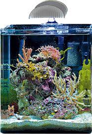 aquarium nano eau de mer nano marinus dennerle