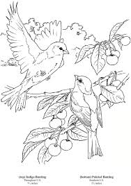 Dover Bird Coloring Pages