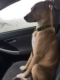 Halloween Express Houston Tx Locations by Hurricane Harvey Holiday Inn Refuses Houston Family U0027s Dogs To Stay
