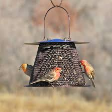 Wire Mesh Bird Feeders For Feeding Wild Birds, Wire Steel Mesh ... Backyard Bird Watching House Finch Nest 5 Weeks Complete Feeding Finches Graycrowned Rosyfinch Audubon Field Guide Free Images Nature Wilderness Branch Seed Animal Summer At Feeder Stock Photo Image 82153967 How To Offer Nyjer Birds Birding Two Great Books For Those Who Enjoy Pet Upside Down Wild Tube Essentials Triple Supoceras Ornithology Finch Breeding Attract Goldfinches Your Dgarden Sfv Idenfication San Fernando Valley Society