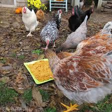 Bigs Pumpkin Seeds Nutrition by The Chicken The Truth About Chickens Pumpkin Seeds U0026 Worms