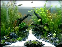 Freshwater | Aquarium | Pinterest | Aquariums, Fish And Fish Tanks Images Tagged With Aquascape On Instagram Aquatic Eden Aquascaping Aquarium Blog Aquascape Pinterest How Much Does It Cost To Run A Fish Tank Tropical Site 20 Of The Most Beautiful Places On Planet This Is Why You Can Natural Httpwwwokeanosgrombgwpcoentuploads2012 Takashi Amano Creator Of The Nature Love Aquascapenl Twitter Hardscape Axolotl Fish And Aquariums Planted Red Green By Adrian Nicolae Design