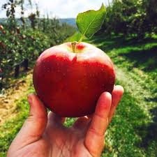 Pumpkin Picking Nj 2015 by Where To Go Apple Picking Near Nyc