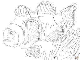 Pin Drawn Clown Little Fish 5