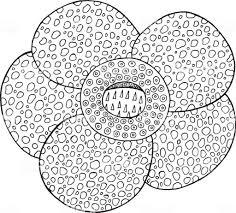 Fleur De Lotus Dessin Facile Haut Coloriage Fleurs A Imprimer